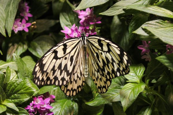 The Butterfly House at the Smithsonian National Museum of Natural History