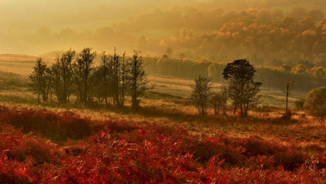 Ashdown Forest, England