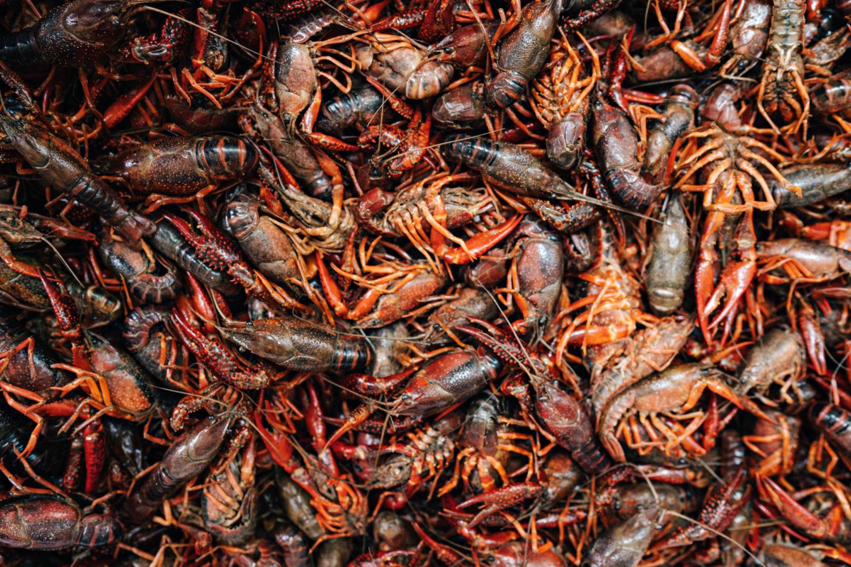 Crawfish in Mobile, Alabama