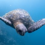 How I Experienced 3 Weeks In The Galapagos Islands For $800