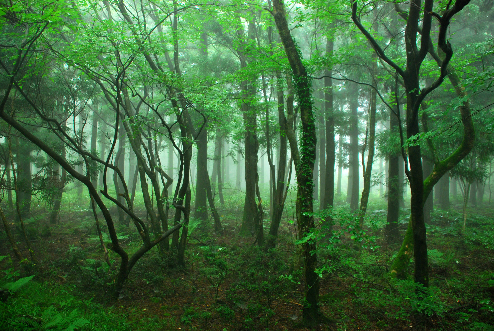 Woods in Jeju Island
