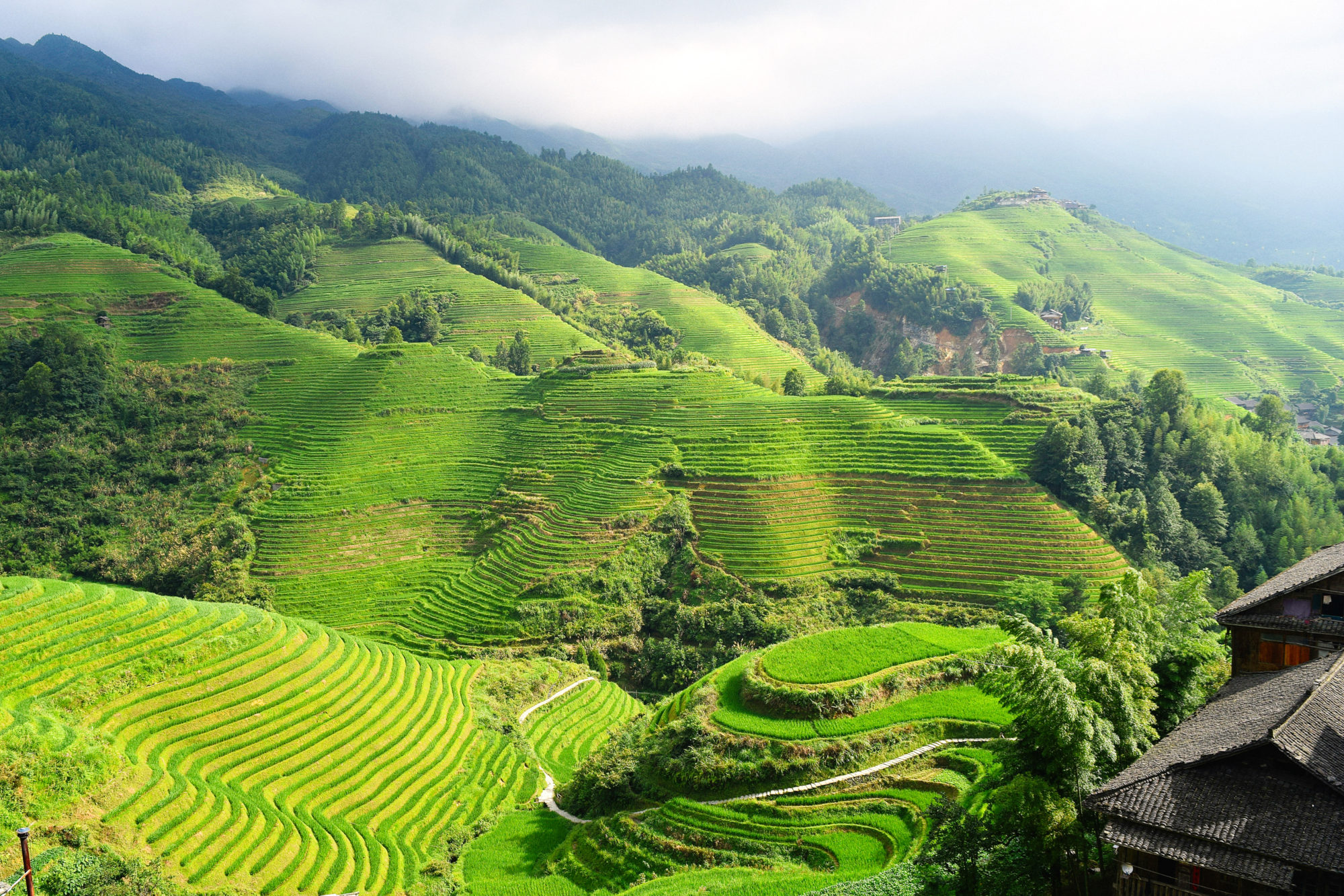 Rice Terraces, Guilin