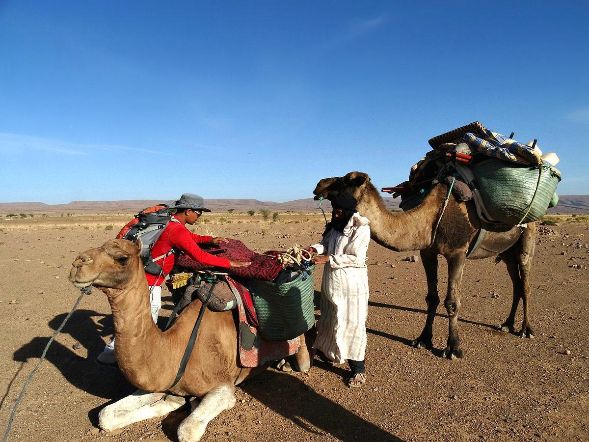 Camel Desert Trek near Zagora