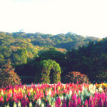 Top Things To Do In Chiang Mai To Get The Most Out Of Your Trip