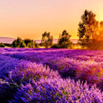 7 Splendid Reasons To Visit France's Provence Region
