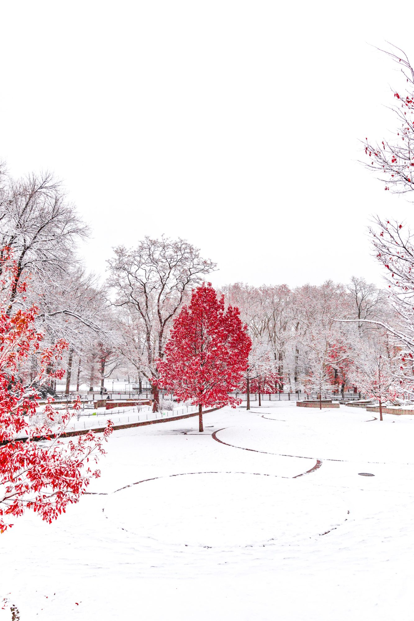Central Park, Winter Wonderlands To Visit