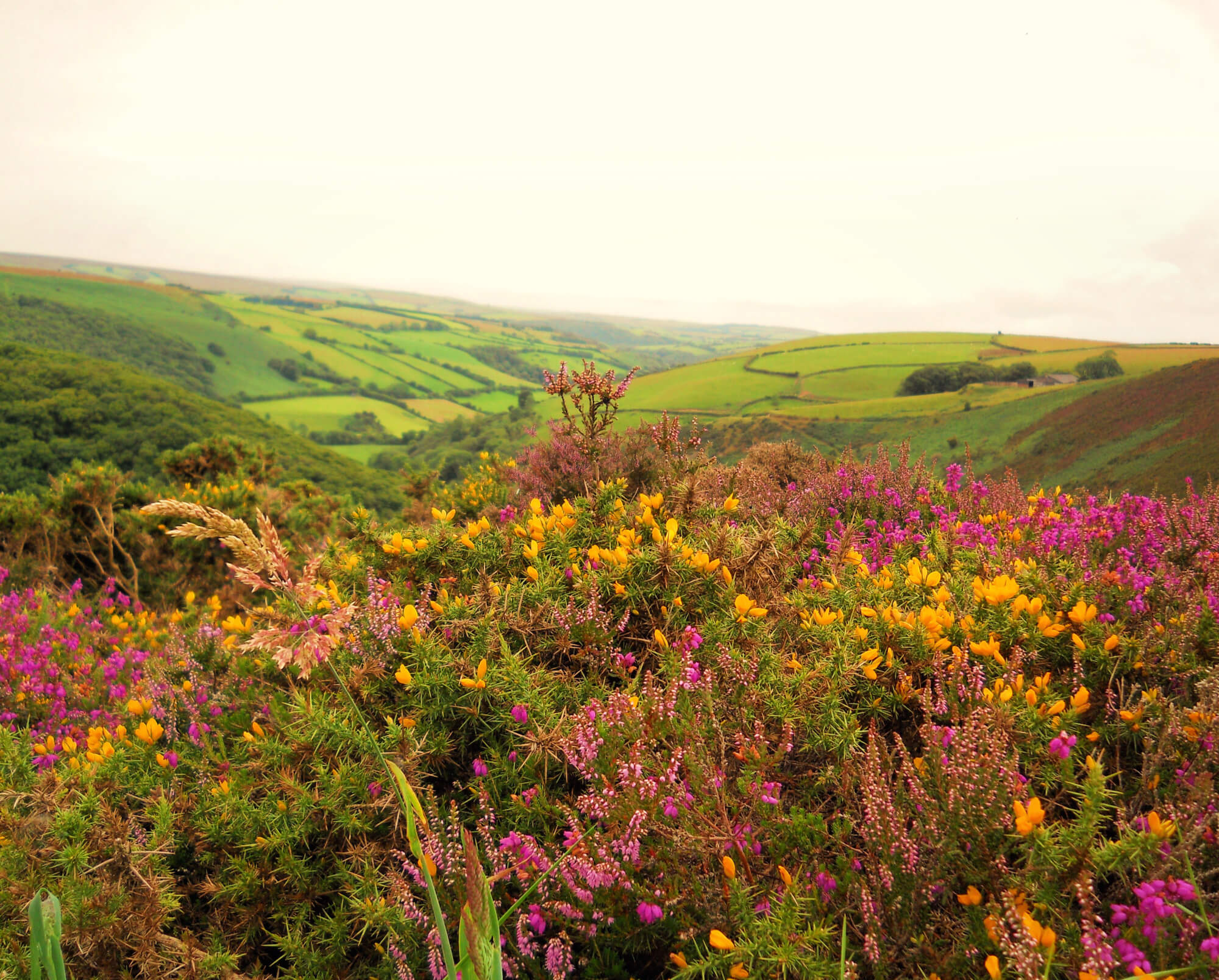 Exmoor National Park only just about made my list of top 10 UK National Parks!